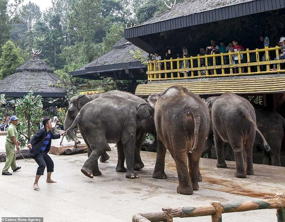 taman safari gajah