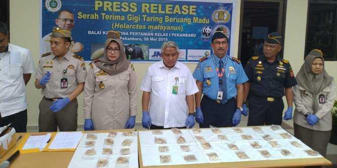 penyelundupan-172-taring-beruang-madu-di-pekanbaru-digagalkan merdeka.com abdullah sani