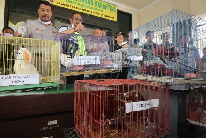 penyelundupan satwa dilindungi surabaya antara foto-didik suhartono