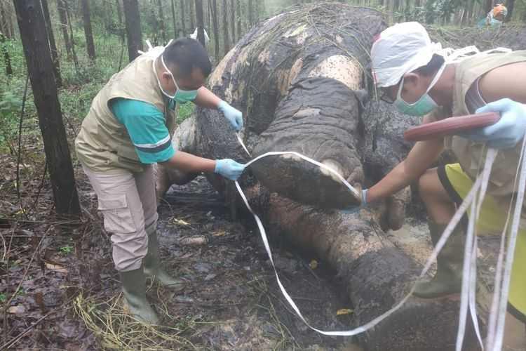 gajah bbksda riau
