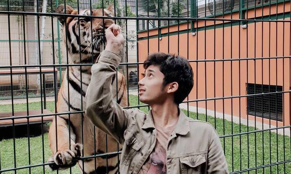 Alshad harimau pikiran rakyat