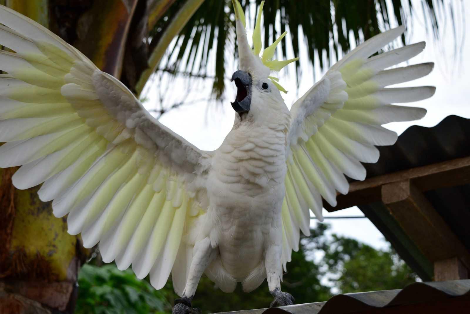 Pemelihara Burung Cenderawasih Dan Kakatua Ditangkap Polisi