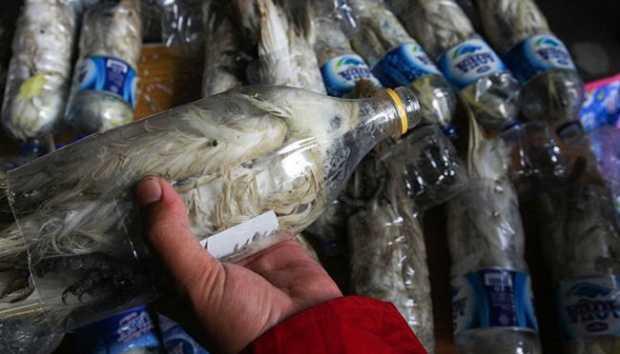 kakatua burung dilindugi di dalam botol