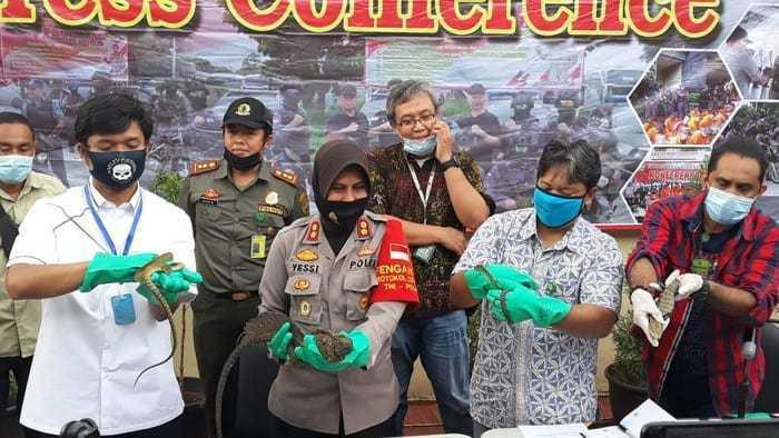 polisi-gagalkan-penyelundupan-reptil_153