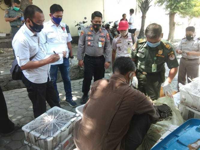 polisi-pelabuhan-gagalkan-penyelundupan-satwa-liar