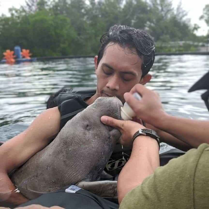 bayi dugong terdampar