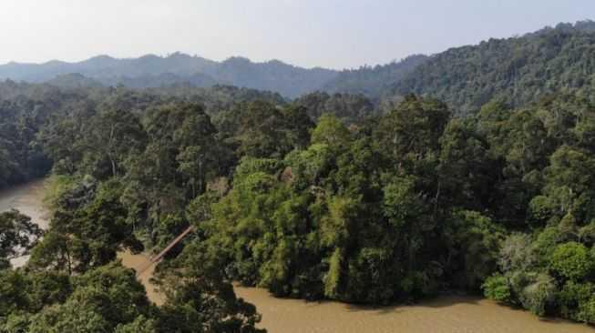 ilustrasi ekosistem