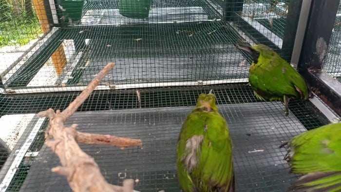 burung yang diselundupkan di Parepare