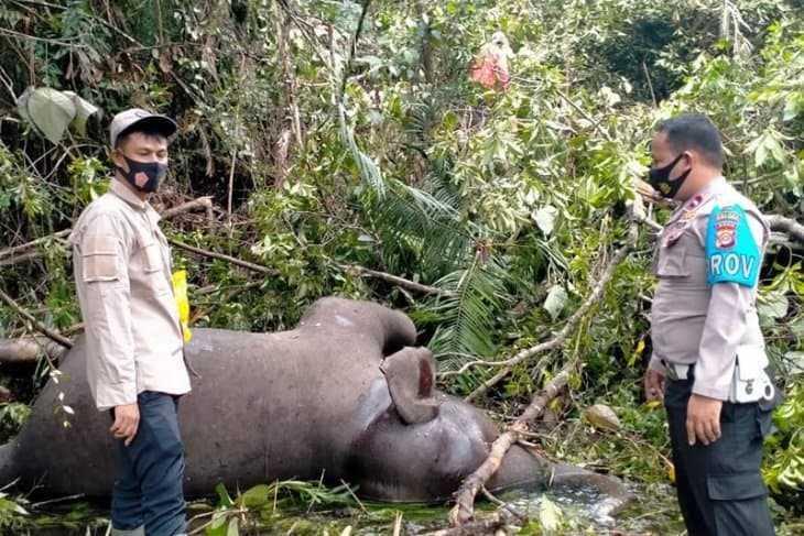 gajah mati di Aceh