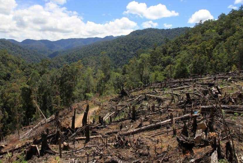 kerusakan lingkungan akibat ekosida