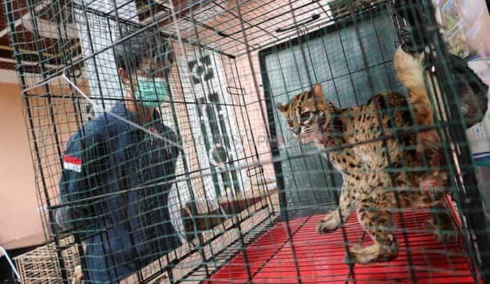 kucing hutang serahan masyarakat