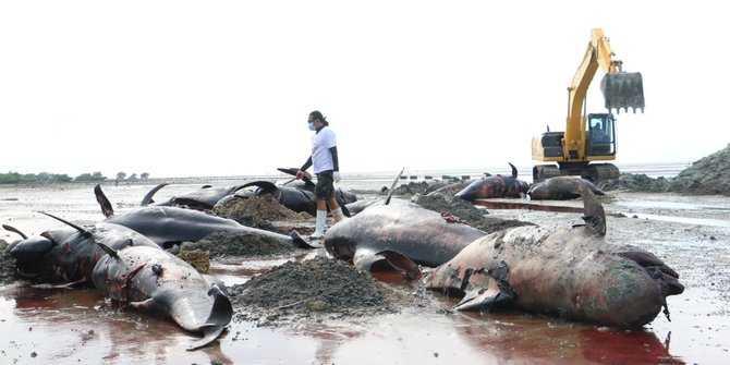 paus yang terdampar di Jatim