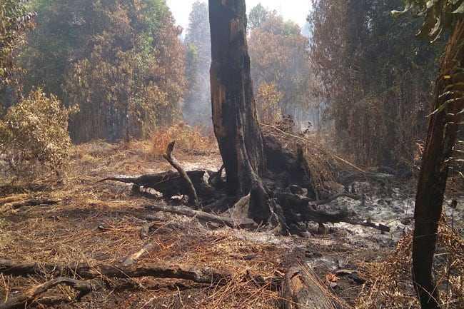 kebakaran-hutan