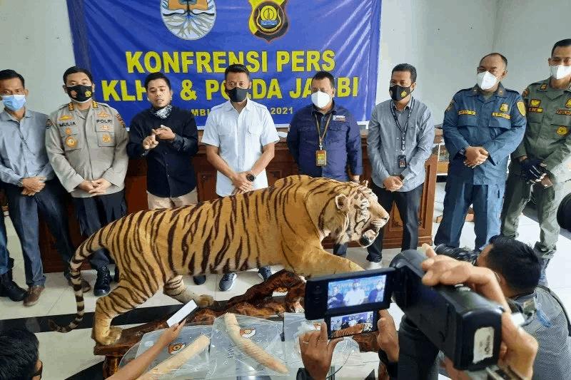 offset harimau