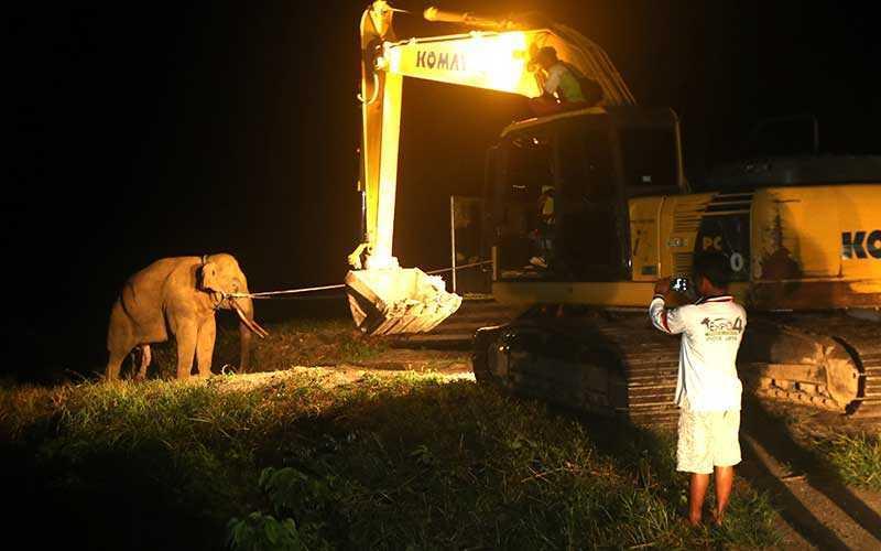 proses translokasi gajah luar