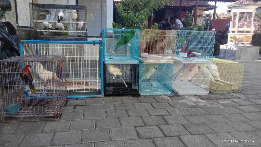 Burung yang disita di Bali