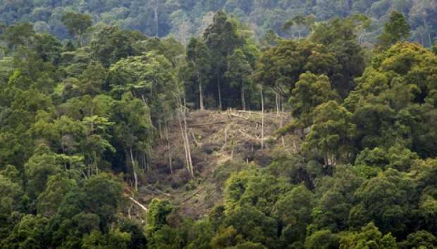 kerusakan hutan