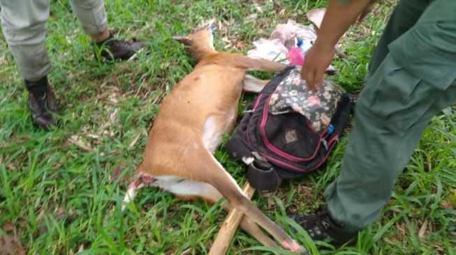 perburuan kijang di Pujon