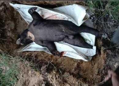 beruang-madu-di-tanahbumbu