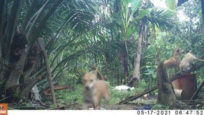 kamera trap di Aceh