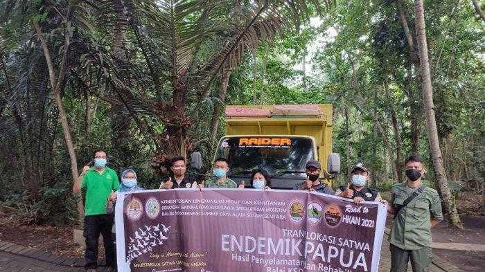 Translokasi satwa ke Papua