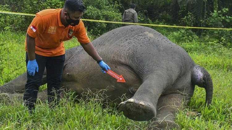 gajah terpenggal